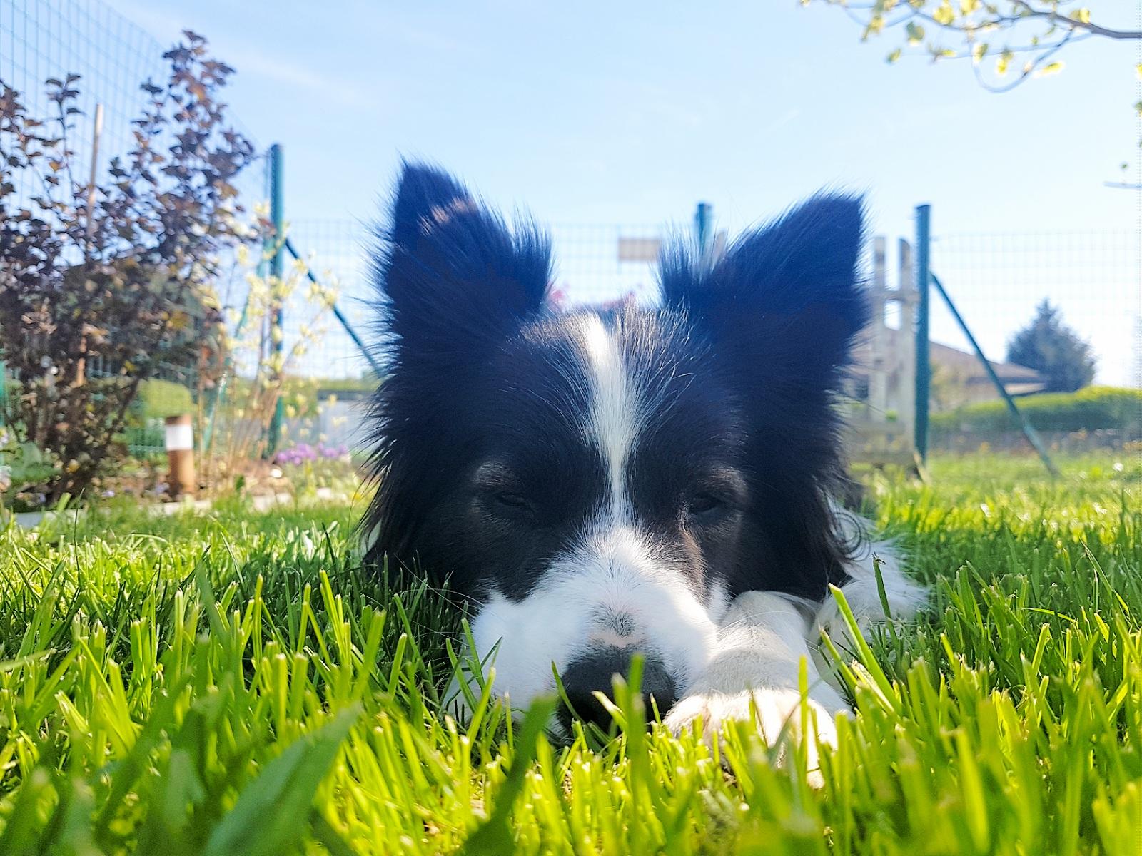 Der Weg zum eigenen Hund und wie es eine  bereichernde Partnerschaft wird – für ALLE!