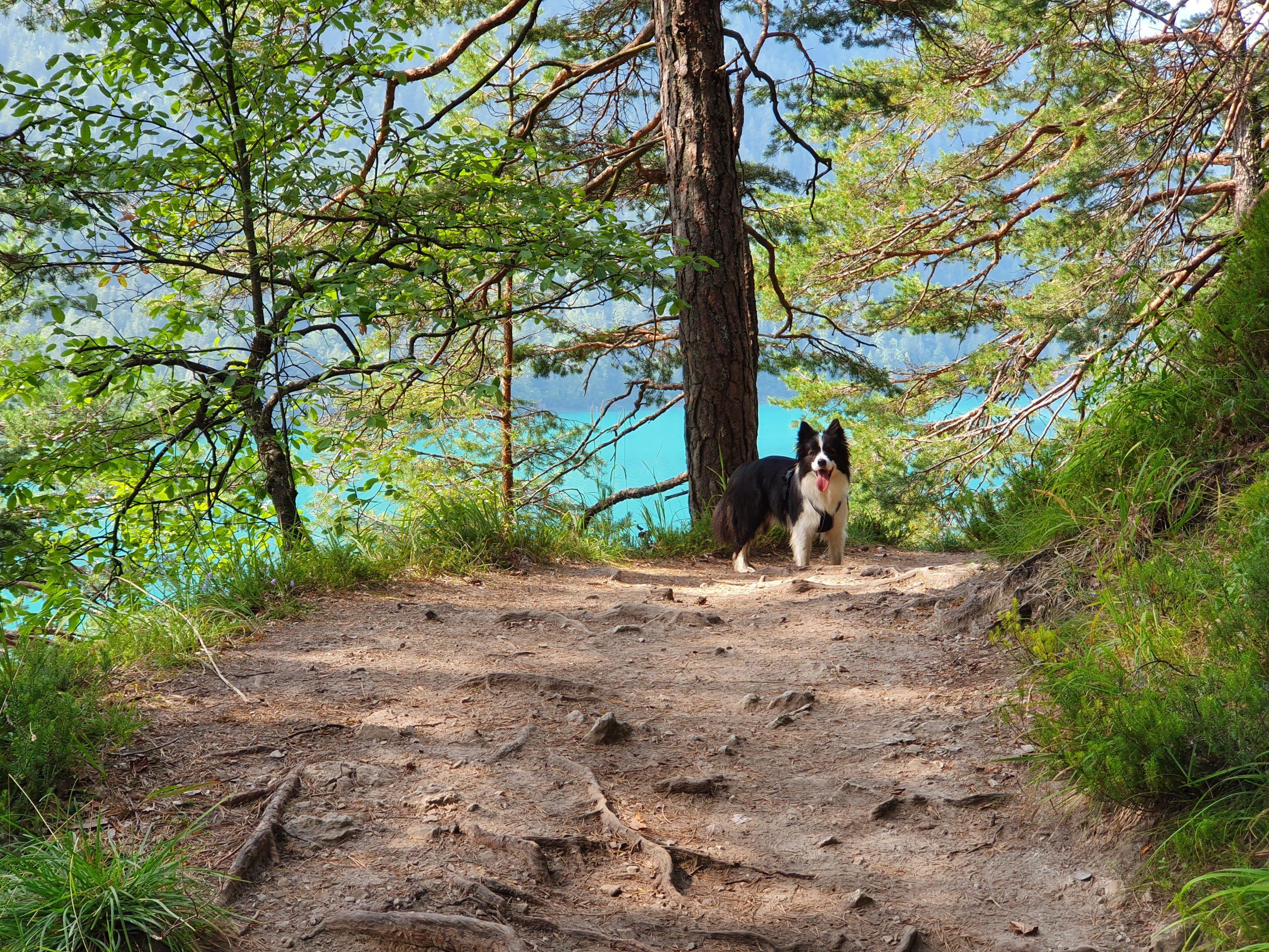 Let's Dog Geheimtipp für Urlaub mit Hund in Österreich