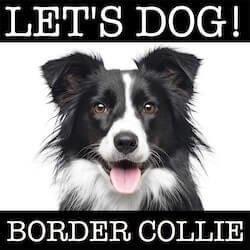 www.lets-dog.com