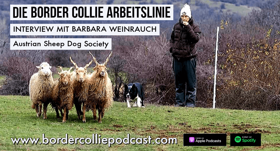 Die Border Collie Arbeitslinie – PODCAST Interview