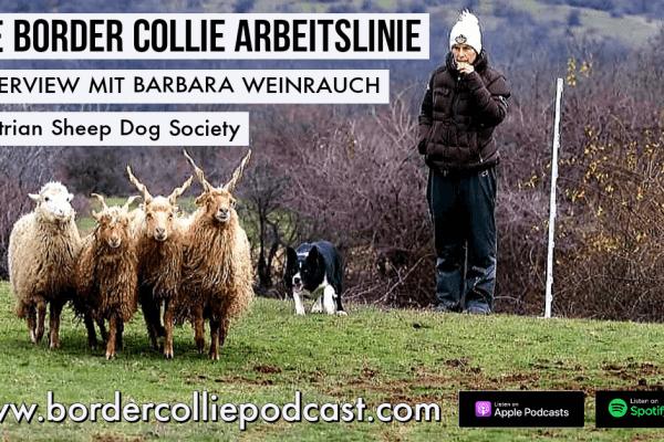 Die Border Collie Arbeitslinie – PODCAST Interview