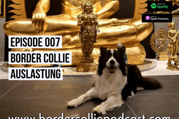 Die richtige Auslastung meines Border Collies – Podcast Episode 007 online