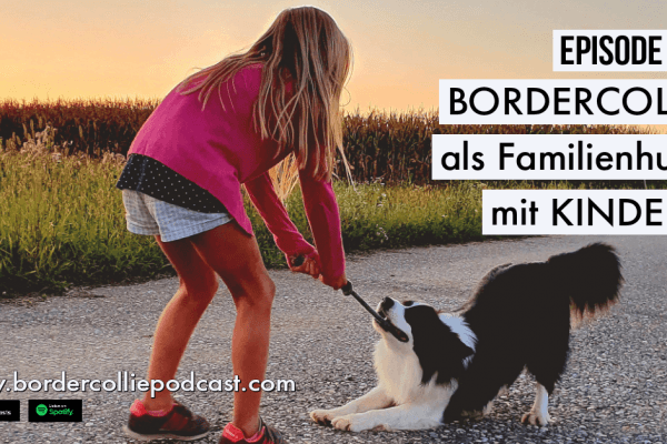 Der Border Collie als Familienhund mit Kindern – Podcast Episode 009 online