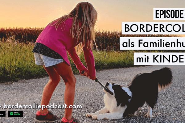 Der Border Collie als Familienhund mit Kindern – Podcast Episode 009 online