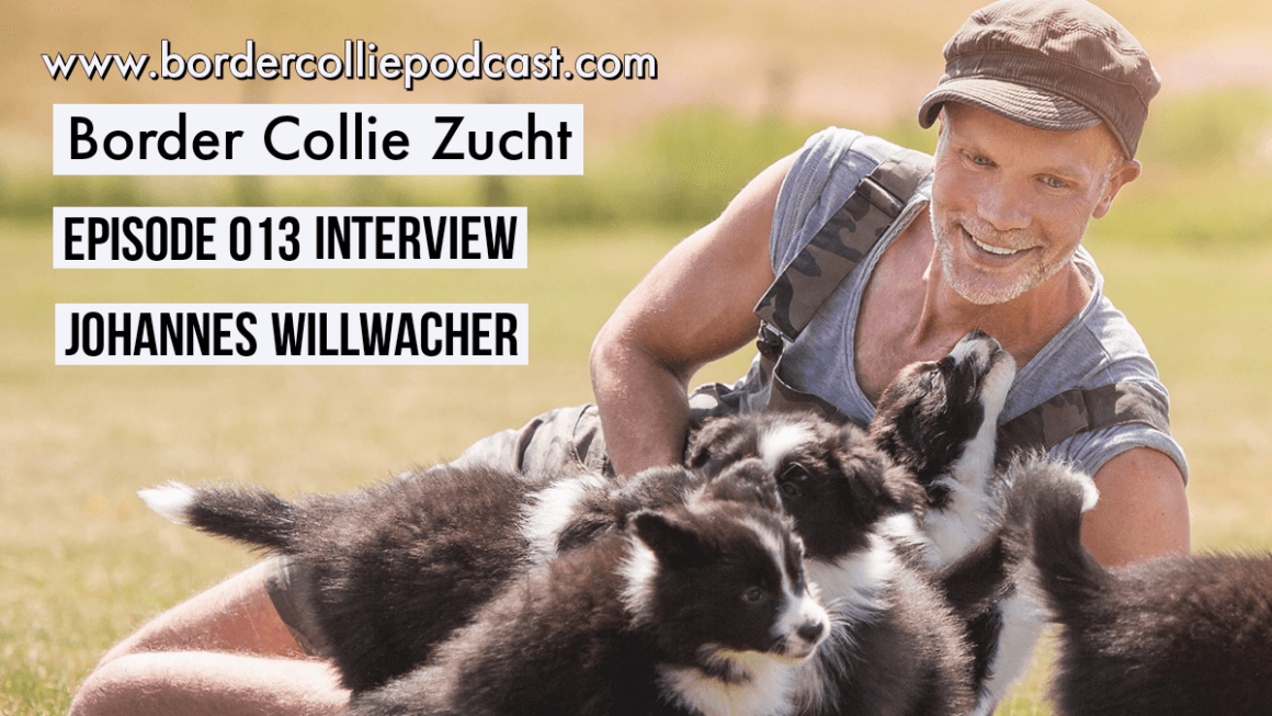Die Border Collie Zucht nach FCI – Interview mit Johannes Willwacher – Podcast Episode 013